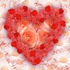 flowers for flower lovers.: love flowers wallpapers.