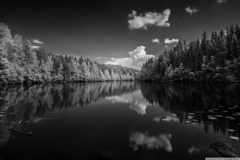 Wallpaper Black And White by Finland Forest Lake Black And White 4k Hd Desktop