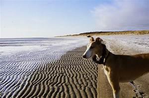 Strandabschnitte föhr