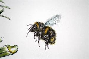 Flying Bee Drawing | www.imgkid.com - The Image Kid Has It!