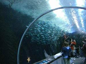 Learn More About the San Francisco Bay's Marine Life ...
