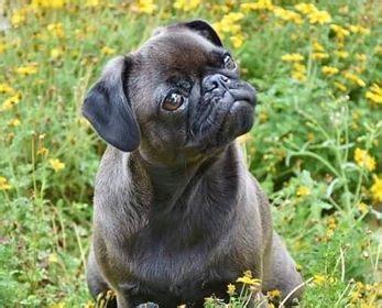 Tests: Cik labi tu pazīsti suņus? - Whisker