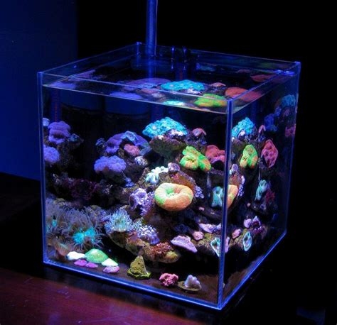 Nano Reef  Baan Reef  Vendita Online Coralli, Pesci E