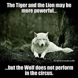 49 best Funny b... Wolf Vs Tiger Quotes