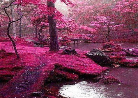 foto de Bosque Rosa Irlanda Pinteres