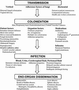 Pathogenesis Of Fungal Colonization And Infection