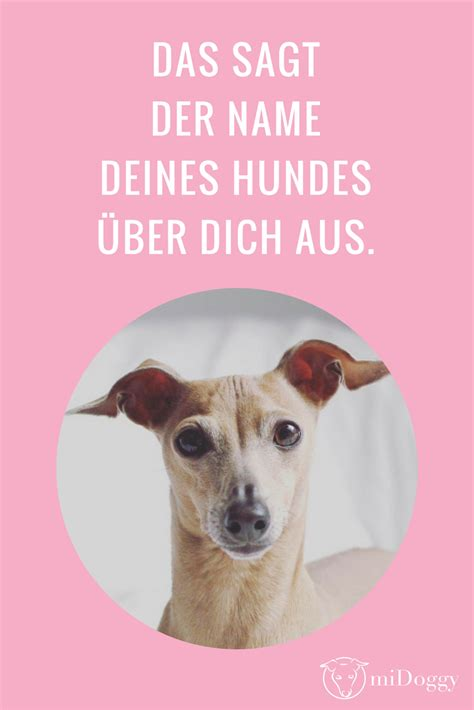 Sattmacher Für Hunde