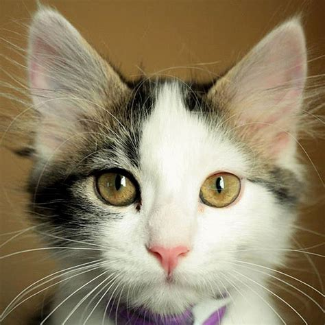 white cat names black and white cat names
