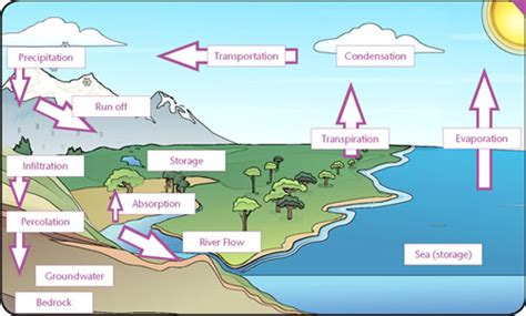 water cycle gcse revision geography weather