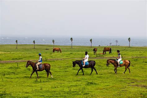 jeju horse island riding taxi ny tour team seoul