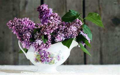 Lilac Wallpapers Lilacs Background Bowl Walls Wallpapersafari
