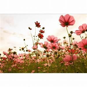 Papier Peint Geant : papier peint g ant d co champ de fleurs 250x360cm ~ Premium-room.com Idées de Décoration