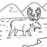 Moose Coloring Pages Printable Drawing Face Shinx Animal Drawings Cool2bkids Printables Getcolorings Paintingvalley Preschoolers Preschool Deer Gaddynippercrayons Animals Colo sketch template