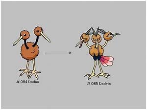 Evolution of the Doduo - Evolution
