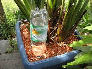 bewasserung selbstgebastelt diese rombergs With garten planen mit zimmerpflanzen bewässerung im urlaub
