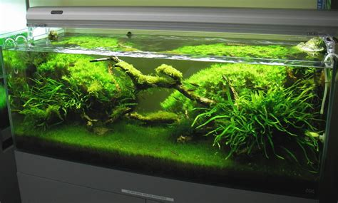 Aquascape Lighting by Pics Collection Of Truly Inspired Aquascape The Fancy Flora