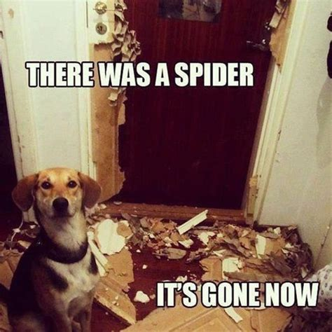 Clean Animal Memes - 131 best bug humor images on pinterest ha ha funny images and funny pics