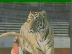Double Team, The Biggest Tiger Stunts Ever Done In A Film ...