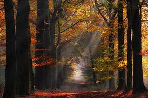 Nature, Landscape, Colorful, Forest, Path, Sun, Rays, Mist, Trees, Fall, Leaves, Atmosphere
