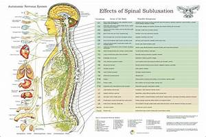 ANS and Effects of Spinal Subluxation Poster 24 x 36