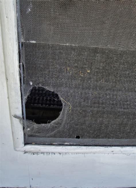Home Maintenance Tip Repair Your Torn Window Screens