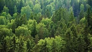 Bilder Vom Wald : bmel nachhaltige waldwirtschaft waldbericht 2017 nachhaltige forstwirtschaft bewahrt den ~ Yasmunasinghe.com Haus und Dekorationen