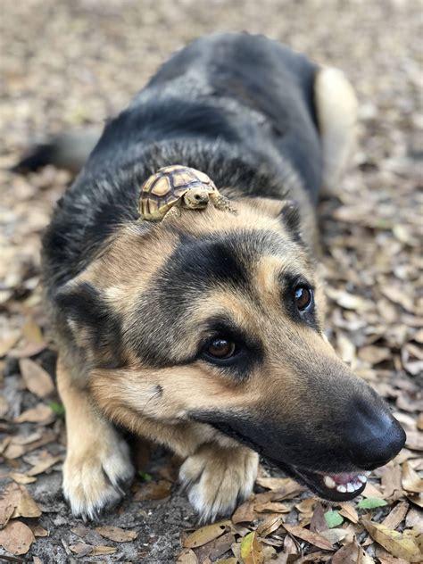 dog   large tumor   head misleadingthumbnails