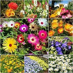 Blumen Für Steingarten : farbenfrohe blumen mischungen der kleine ~ Markanthonyermac.com Haus und Dekorationen