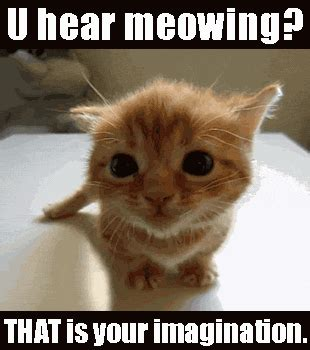 Cat Meow Meme - best images collections hd for gadget windows mac android
