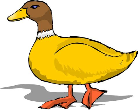 Cartoon Ducks Images