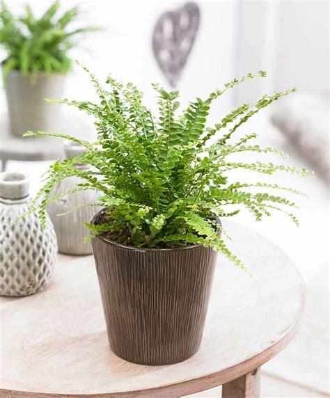 piante da appartamento purificanti le migliori da coltivare