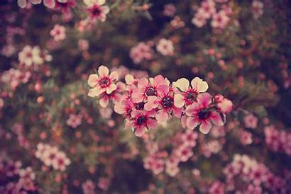 Flower Quotes Mobile 1080p Wallpapers Title