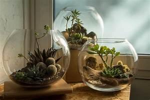 Terrarium Plante Deco : 1001 mod les de terrarium plante en bocal ferm ou ouvert ~ Dode.kayakingforconservation.com Idées de Décoration