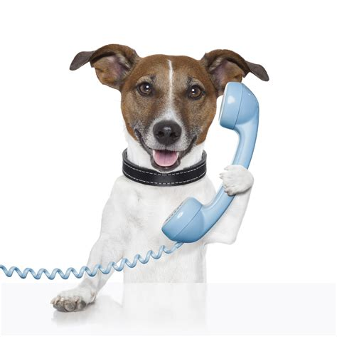 contact phone pet sitters lauderdale fort dog beach sitting send message
