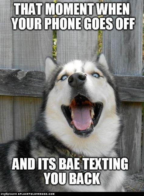 Dog On Phone Meme - dog phone meme