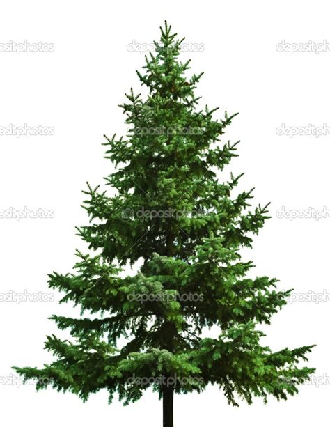 the wild beauty christmas trees absorb greenhouse gasses