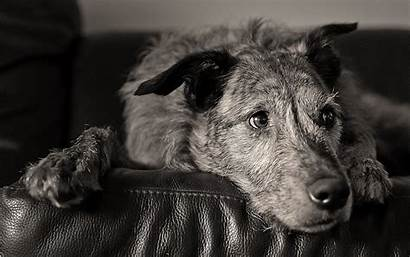 Fur Dogs Animals Face Dog Eyes Monochrome
