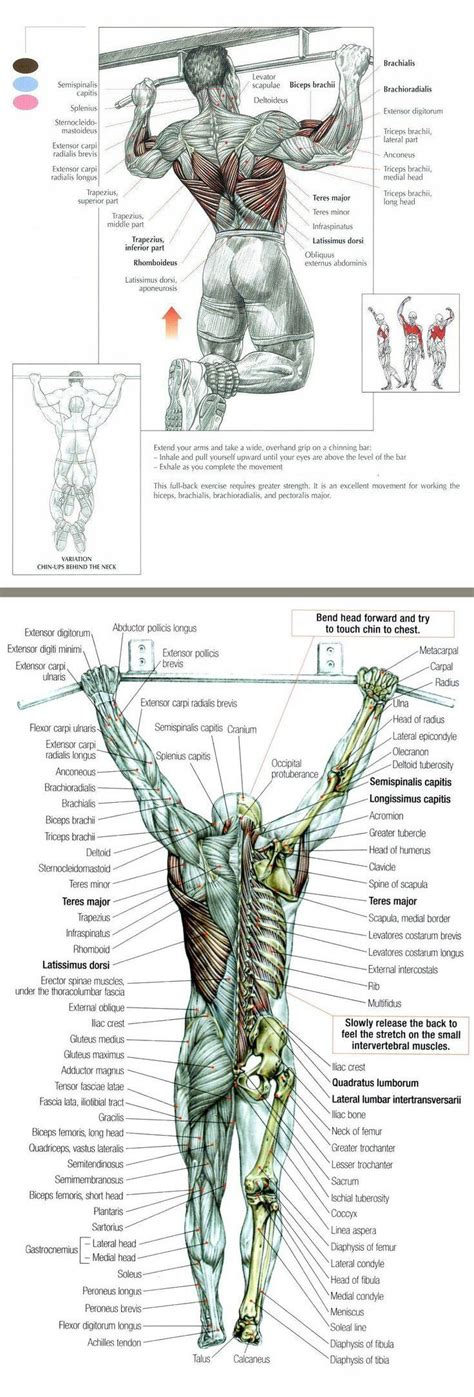 If we put enough mechanical tension on our muscles, they will grow. Pin by JennyAguilar195 on Gym | Bodyweight workout ...