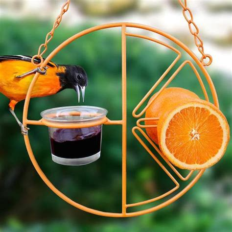 Oriole Feeder Grape Jelly by Clementine Oriole Feeder For Fruit Jelly The Birdhouse