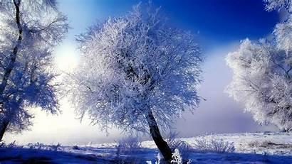 Winter Christmas Desktop Scene Background Scenes Backgrounds
