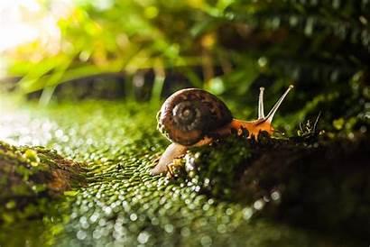 Macro Snail Nature Wallpapers Snails Grass Desktop