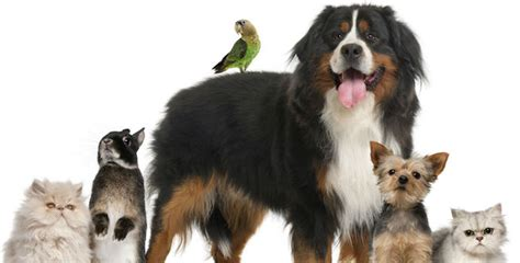 pat les animaux de compagnie la phyto aromath 233 rapie pour les animaux de compagnie