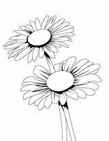 Coloring Daisy Flower Pages Blooming Flowe Printable Getcolorings sketch template