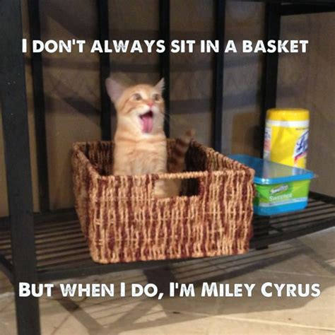 Miley Meme - miley meme memes pinterest meme and haha