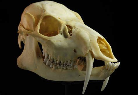 simon winchester skulls kuow news  information