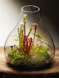 Minigarten Im Glas : pflanzen terrarium einrichten stunning pflanzen sonnentau with pflanzen terrarium einrichten ~ Eleganceandgraceweddings.com Haus und Dekorationen