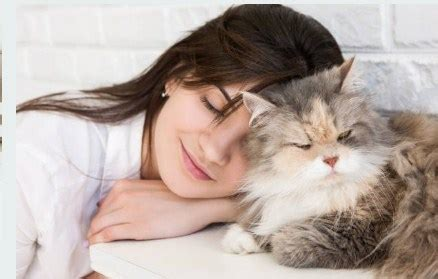 Cat Excessive Shedding by Excessive Hair Shedding In Cats