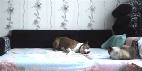 Hidden Camera Catches Dog Playing Bed While Its Owner
