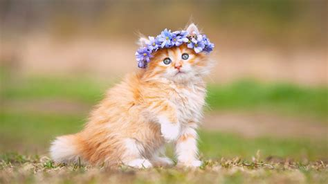 Adorable Animal Wallpapers - wallpaper kitten adorable hairband hd animals 897