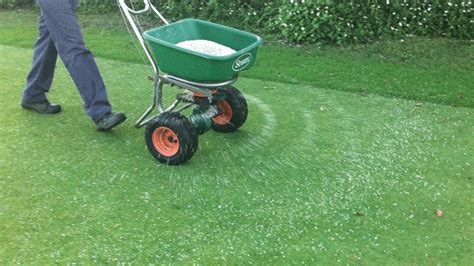 Your Fall Lawn Care Survival Guide